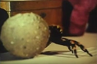 Image from: Giant Spider Invasion, The (1975)