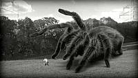 Image from: Giant Spider, The (2013)