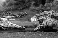 Image from: Valley of the Dragons (1961)