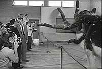 Image from: Earth vs the Spider (1958)