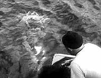 Image from: Phantom from 10,000 Leagues, The (1955)