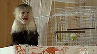 Image from: Flying Monkeys (2013)