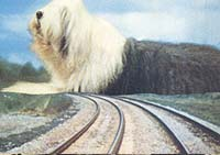 Image from: Digby, the Biggest Dog in the World (1973)